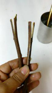Tamarind leaves stem used as wooden stick